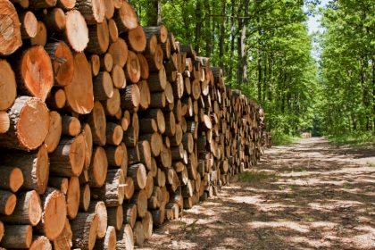 چوب های مناسب مبلمان فضای باز